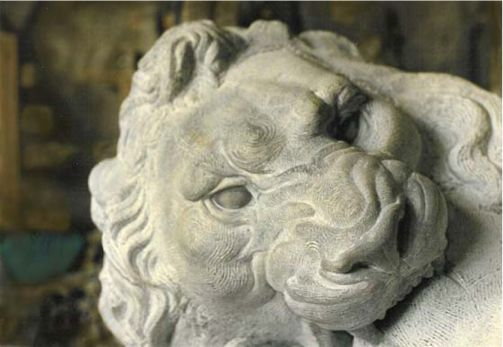 6closeup lion